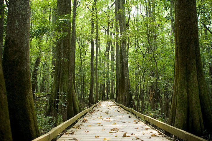https://www.lakemurraycountry.com/wp-content/uploads/2021/01/Congaree-web-size.jpg